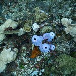 Pretty Purple Coral