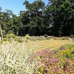 Spider garden