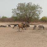 Ecotours Gambia Foto