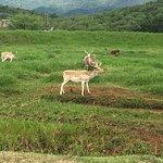 Bioparque Estrella照片