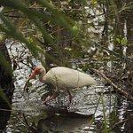 Foto de Six Mile Cypress Slough Preserve