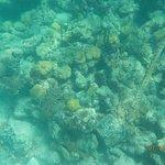 Foto di Bight Reef