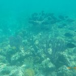 Bight Reef resmi