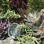 Billede af Coastal Maine Botanical Gardens