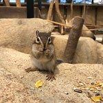 صورة فوتوغرافية لـ Squirrel Forest Hidayama Native Grass Garden