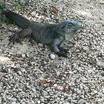 Zdjęcie Cayman Safari Adventures