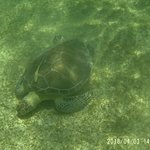 Photo of Turtle Snorkeling in Akumal