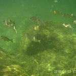 Como en toda la laguna, gran cantidad de peces
