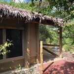 Fig Tree Camp Bild