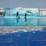 Photo of Hurghada Mermaid Tours