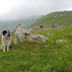 Shepherd dog in the highlads