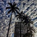 as palmeiras imperiais da praça ramos