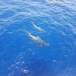 Foto di Shogun Boat Trip