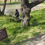 Foto de Sakitama Kofun Park
