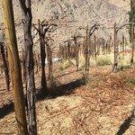 Photo of Destileria Pisco Mistral