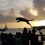 the cat guy's cat, making a leap in front of the sunset