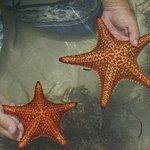 Starfish Point