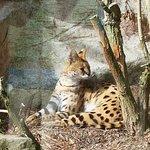 Bilde fra Porfell Wildlife Park & Sanctuary