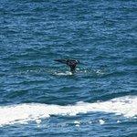 Φωτογραφία: Boiler Bay State Wayside