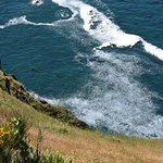 Cape Foulweather resmi
