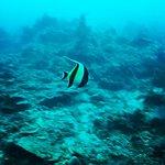 Le Centre Bali Fab Dive Photo