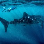 Photo of Kings Ningaloo Reef Tours Exmouth