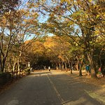 Foto de Seoul Grand Park