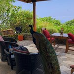 Kane Plantation Guesthouse : View from the balacony