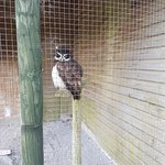 Screech Owl Sanctuary ภาพถ่าย