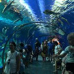 Photo of Blue Planet Aquarium