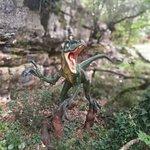 Foto de Dinopark Funtana