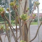 Billede af Botanic Gardens