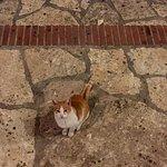 صورة فوتوغرافية لـ Agios