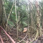 Karura森林照片