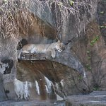 Lion blends in so well with the rocks