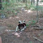 Foto van Duke Lemur Center