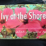 Ivy at the Shoreの写真