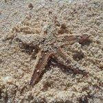 Bild från Abrolhos Islands