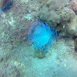 Foto Blue Coral Diving - Kursus menyelam