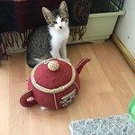 Kyrenia Animal Rescue-bild