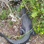 Bilde fra Anhinga Trail