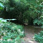 Φωτογραφία: Jungle Garden Karlostachys