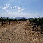 Bild från Hendry Ranch Wines