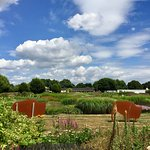 Sussex Prairies Garden Foto