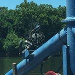 Фотография Historical White's Ferry