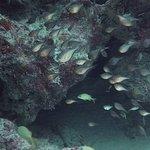 Hatchet fish in a swim thru