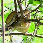 Φωτογραφία: Caroni Bird Sanctuary