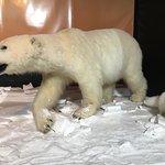 Foto de Gros Morne Wildlife Museum