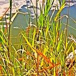 Foto de Lake Manawa State Park