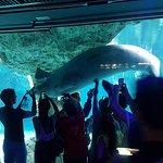 Photo de Aquarium of Genoa